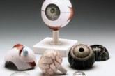 مولاژ چشم انسان