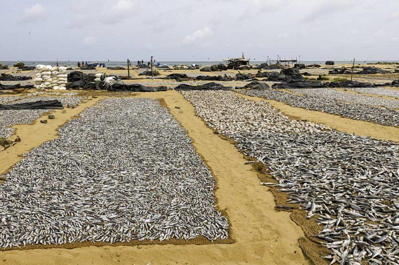 فروش ماهی خشک