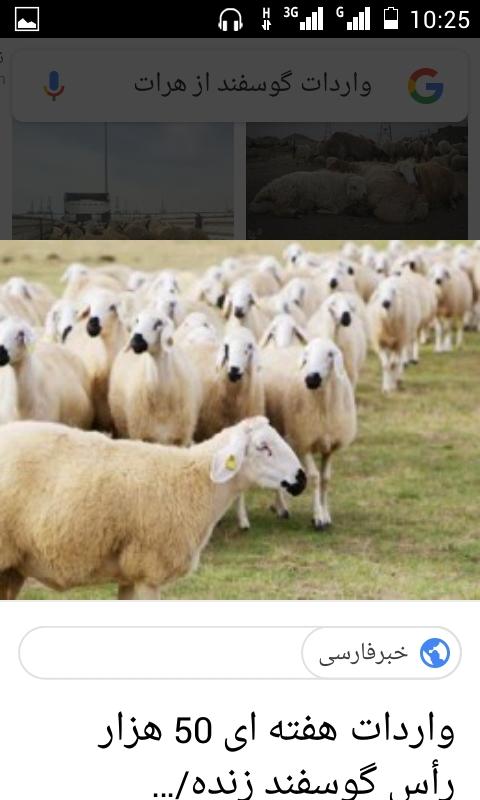 سرمایه گزار برای واردات گوسفند از افغانستان