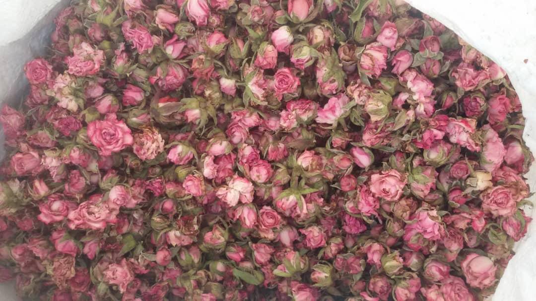 فروش غنچه خشک گل ساناز و رز