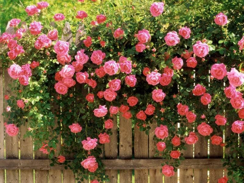 فروش انواع گل وگیاه