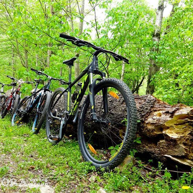 تور یکروزه دوچرخه سواری