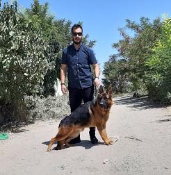 سگ همراه ژرمن شپرد