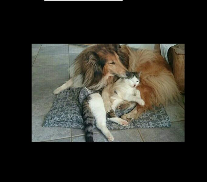 از سگ و گربه شما در منزلتان نگهداری میکنم