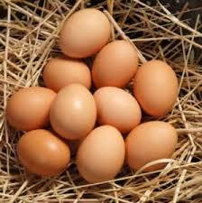 فروش تخم نطفه دارو خوراکی اردک غاز . مرغ محلی
