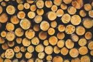 خرید و فروش انواع چوب: چوب پالتی، ضایعاتی ، زغالی و تخته
