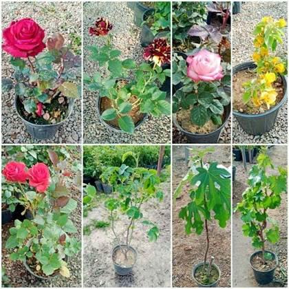 فروش انواع گل رز و کاغذی