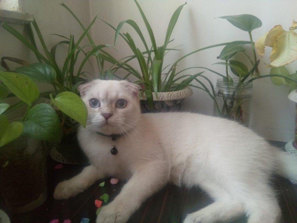 پانسیون وپرورش گربه