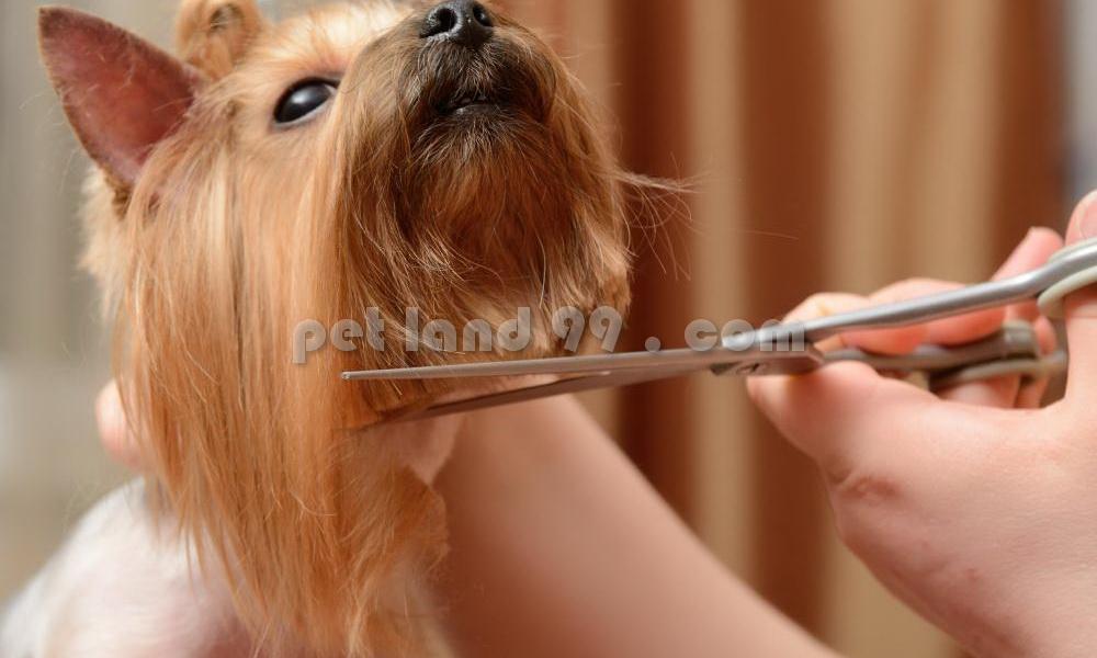 آرایشگاه حیوانات خانگی