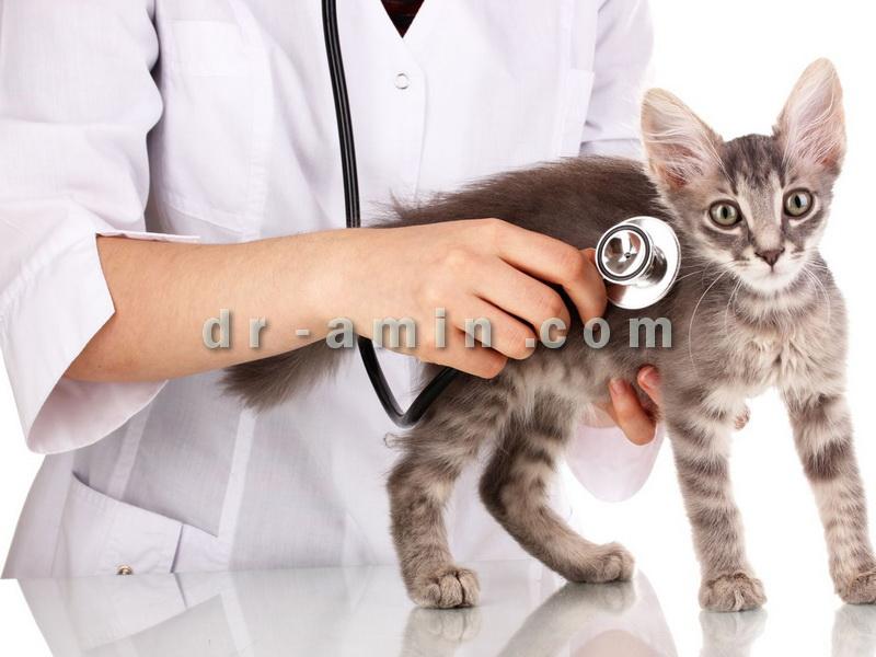 مطب دامپزشکی دکتر امین