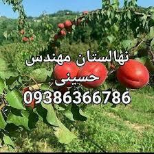 نهالستان مهندس حسینی